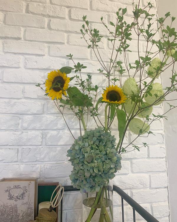 サロンの新しいお花たち🌼